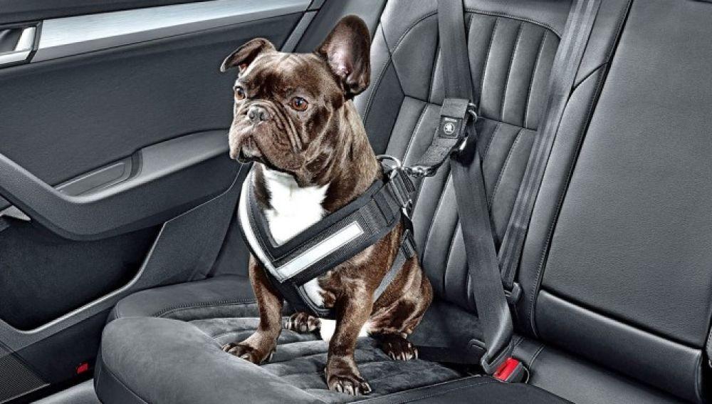viajar-mascota-coche-2016-00-960x384.jpg
