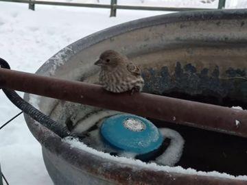Rescate pájaro