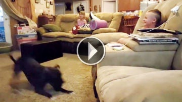 pit-bull-dog-gets-the-zoomies-and-makes-the-kids-laugh-hysterically.jpg