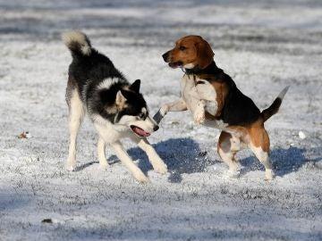 Imagen de archivo de dos perros enfrentados