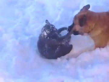 perro-y-gato-nieve2.png