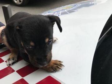 Cachorro de perro rescatado en Cartagena
