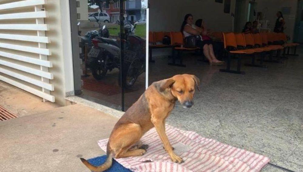 Perro brasileño