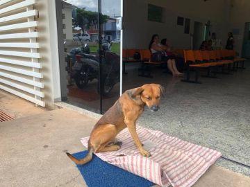 Un perro sigue esperando que salga del hospital su dueño fallecido
