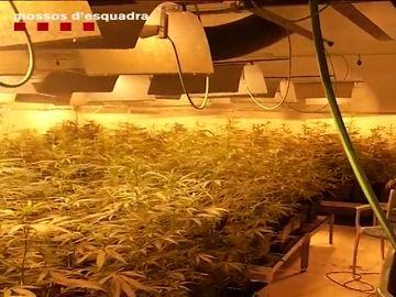 Ocho detenidos por tráfico de drogas en L'Hospitalet de Llobregat y Piera, Barcelona