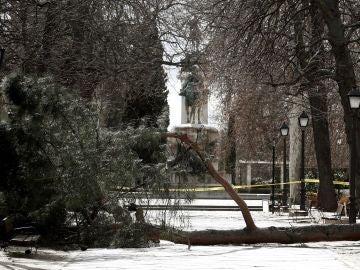El árbol caído que ha causado la muerte del niño