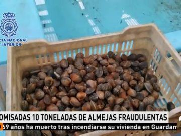 Incautadas 10 toneladas de almejas capturadas ilegalmente