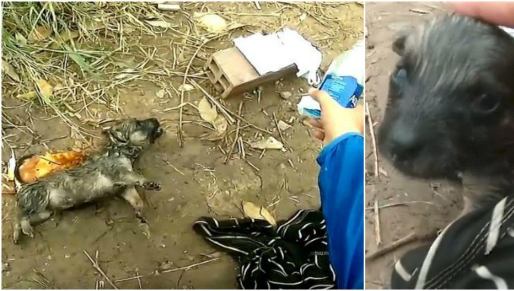 Un ciclista salva a un cachorro en Vietnam