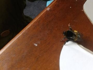 Una abeja 'saluda' con su pata central después de que le salven la vida