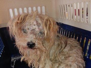 Perro rescatado en Málaga