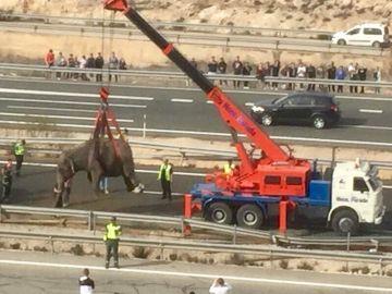 Un elefante es apartado de la vía en Albacete tras un accidente