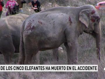 El accidente de un camión con elefantes provoca el corte de la A-30 porque los animales han invadido la vía