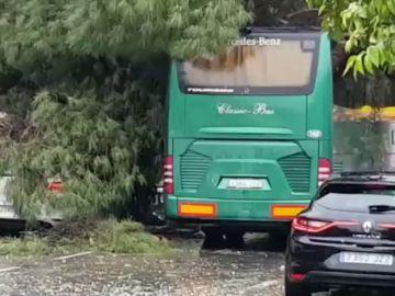Una racha de viento derrumba un árbol sobre autobús en Sevilla