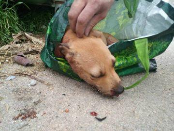 Vida, la perrita encontrada apaleada en un contenedor de Baleares