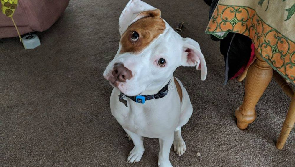 Ivor, el cachorro sordo que entiende lenguaje de signos