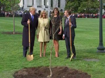 Emmanuel Macron regala un roble del bosque de Belleau a DonaldTrump