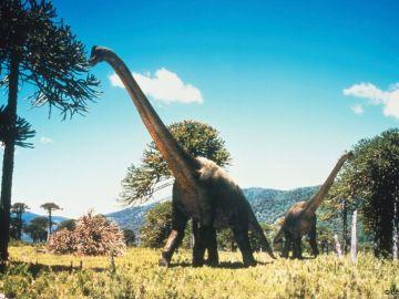 Caminando entre dinosaurios (Sección)
