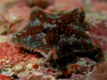 Imagen de una estrella de mar