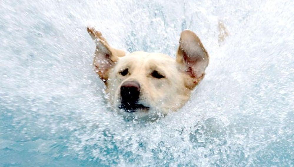 Un perro en el agua