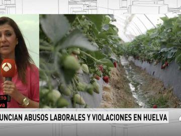 Denuncian abusos y violaciones en campos de fresas de Huelva