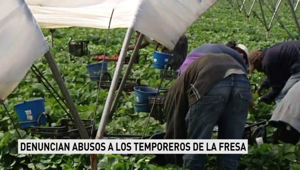 Una publicación alemana denuncia violaciones y abusos en los campos de fresa de Huelva y los sindicatos agrícolas lo desmienten