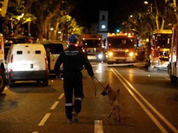 Miembros de la patrulla canina se dirigen al edificio derrumbado