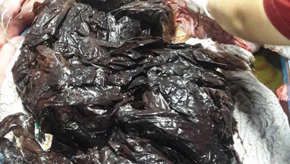 La ballena fallecida tenía 80 bolsas de plástico en su interior