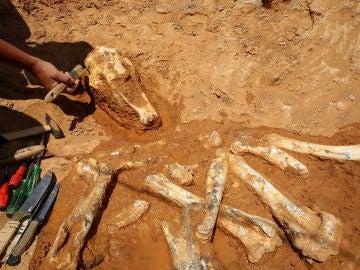 Los paleontólogos están trabajando en una excavación en un lecho de un río en Pikermi, Attica (10-06-2018)