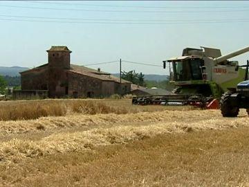 Las lluvias ha aumentado la cosecha de cereales, a pesar del retraso de la campaña de recogida