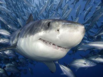 Un hombre de 61 años escapa del ataque de un tiburón al darle un puñetazo en las branquias