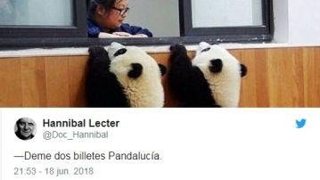 Dos osos panda