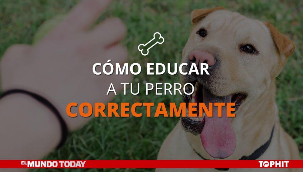 Cómo educar a tu perro