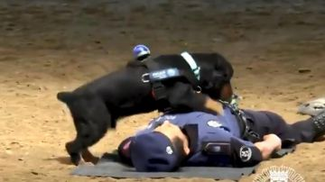 Poncho, el perro policía