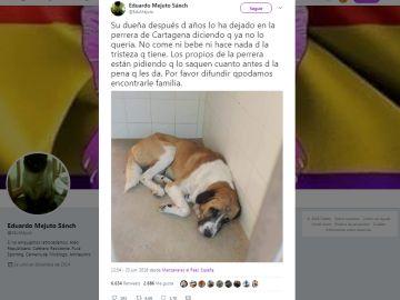 Perro abandonado en Cartagena