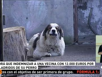 Condenan a un hombre a 12.000 euros de multa y cuatro meses de cárcel por los ladridos de su perros
