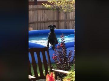 El perro tras percatarse de que su dueño le está vigilando