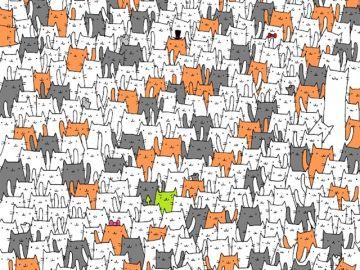 ¿Puedes encontrar el conejo entre los gatos?