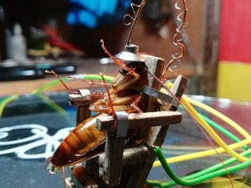 La cucaracha siendo electrocutada