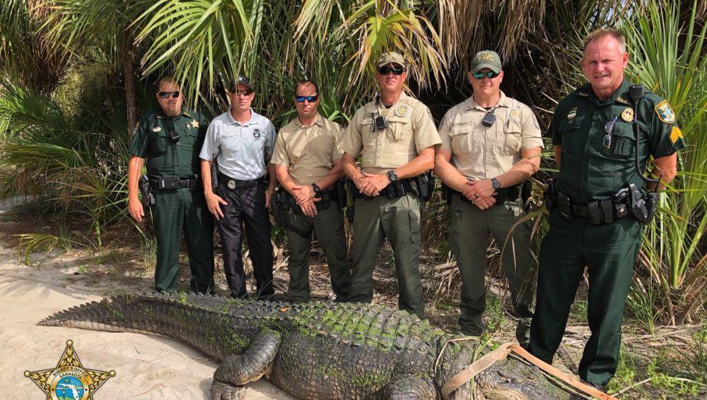 Los agentes junto al caimán capturado