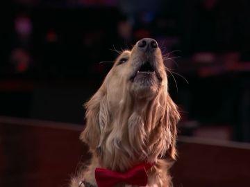 Oscar, el golden retriever que en 'America's got Talent'
