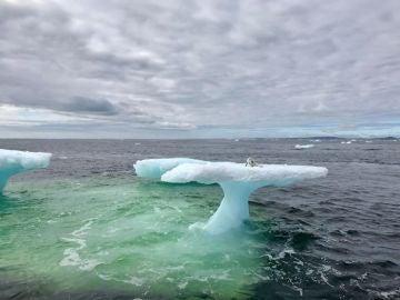 Rescatado de un iceberg