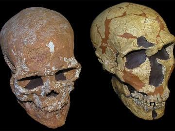 Un craneo revela nueva informacion del sistema visual neandertal