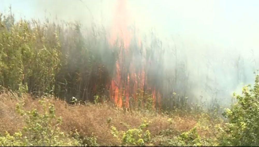 Aparatoso incendio de un cañaveral en La Laguna, Tenerife