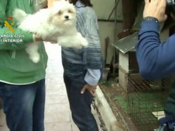 Más de 100 perros maltratados en un centro canino en Madrid