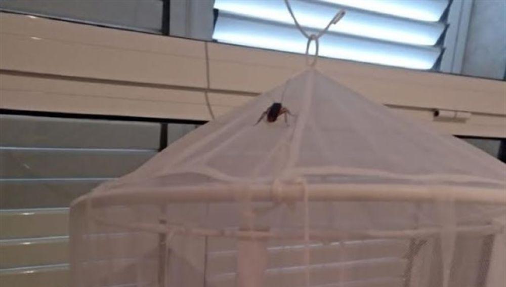 Una cucaracha sobre una mosquitera