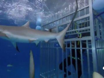 El susto de Shaquille O´Neal con los tiburones en una televisión americana