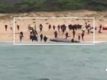Ascienden a 751 los inmigrantes rescatados en el Estrecho