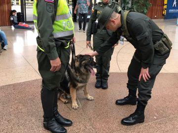 Perra policía en un aeropuerto de Colombia