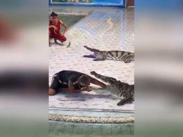 Un cocodrilo muerde a su cuidador en Tailandia