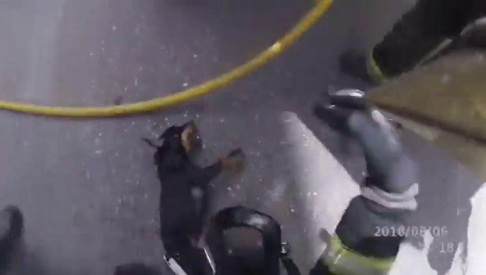 La heroica actuación de los bomberos de Córdoba: salvan la vida a un perro incosciente en el incendio de una vivienda